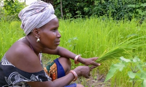 Five Ways to Make Agriculture Innovation Better Serve the Needs of Women Farmers