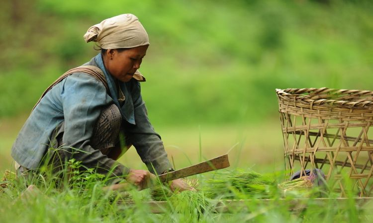 For Smallholder Farmers, Tenure Makes a Crucial Difference in Livelihoods