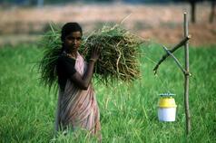 Prolinnova India Report 2014