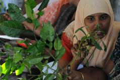 Moving in the right direction: join the debate on the CGIAR agenda