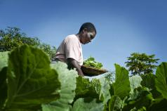 Operationalising an EU Approach to Research and Innovation for Sustainable Agriculture and Food and Nutrition security