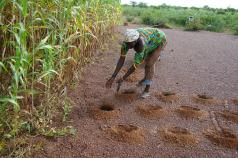 An effective strategy for CGIAR's next ten years? Consultations on the SRF continue