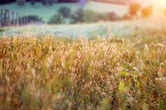 Even a few organic fields on a farm may improve biodiversity, the study found