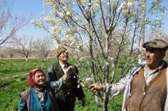 Collaboration for innovation: Rural Advisory Services in Central Asia and Southern Caucasus