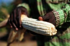 Can Africa provide enough low-carbon land to meet global food needs?