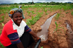 International Organizations and the Transformation of Agriculture
